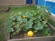 school garden August 2018 004