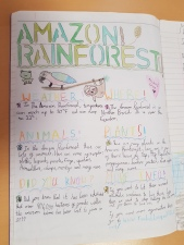 Rainforest Posters (1)