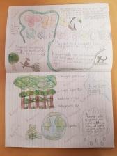Rainforest Posters (3)