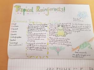 Rainforest Posters (4)